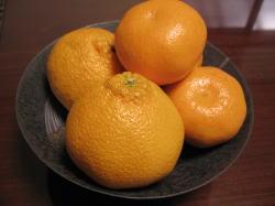 清見オレンジ・デコポン