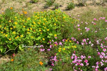 Flower_bed